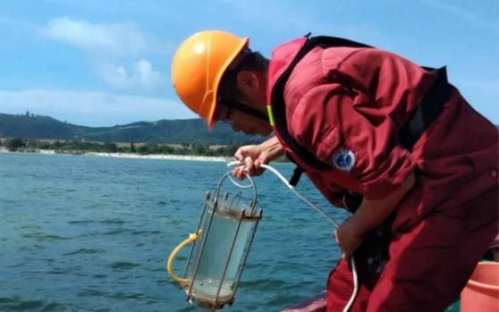 自然资源部南海局完成海草床生态系统试点调查 调查区域为陵水新村港和黎安港